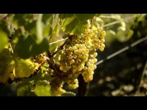 Le Vin Selon Alain Brumont Clip 7: Les Cépages
