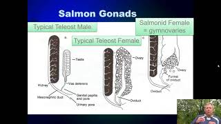 Ichthyology Lecture 20 - KY Families - Salmon and Trout