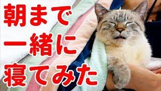 【かわいすぎ注意】猫のデュフィと朝まで一緒に寝てみたら…<第2弾> thumbnail