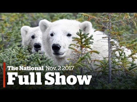 The National for Thursday, November 2nd: Vanishing bears, workplace harassment, extinguisher recall