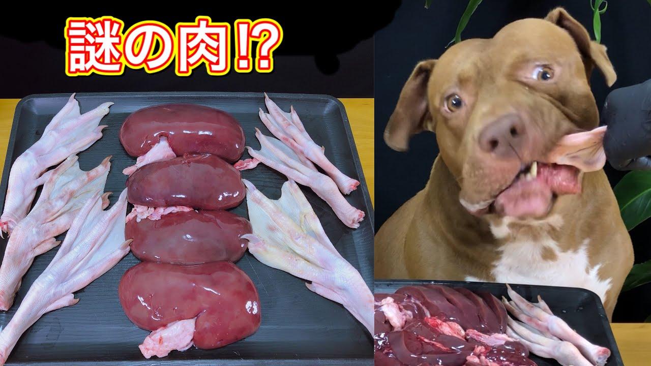 【咀嚼音】犬がアヒルの脚をバリバリ噛み砕く!ASMR音フェチ必見動画!