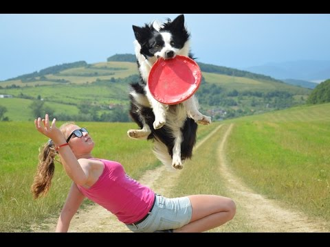 TRICKS & FRISBEE| Aja & Rita| Border collie