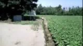 聖地と言われたらしい春来崎(堂崎)のキリシタン墓碑。 祭祀に使われる...
