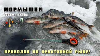 ЛОВЛЯ ОКУНЯ ЗИМОЙ на мотыля МОРМЫШКИ КАПЛЯ И ВЕДЬМА рыбалка бесполезный ЭХОЛОТ