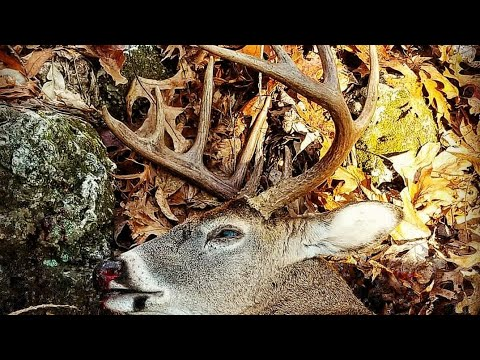 Pursuing Whitetails In The Ozarks