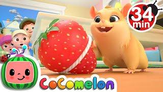 Baixar Lost Hamster + More Nursery Rhymes & Kids Songs - CoComelon