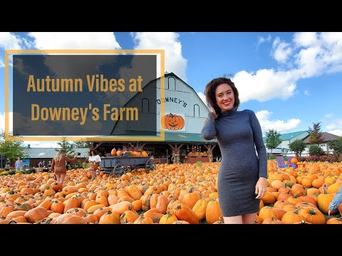 A-maize-ing Corn Maze  @Downey's Farm