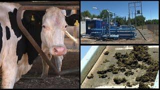 Chili : fabriquer de l'électricité avec des excréments d'animaux