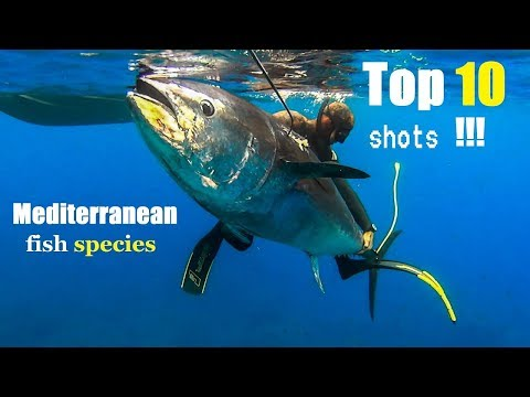 TOP 10  BEST SHOTS PESCA SUB Mediterranean Fish |Spearfishing Life 🇬🇷 ✅