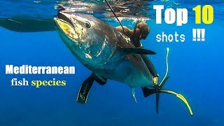 Spearfishing 🇬🇷 | TOP 10  BEST SHOTS PESCA SUB Mediterranean fish ✅