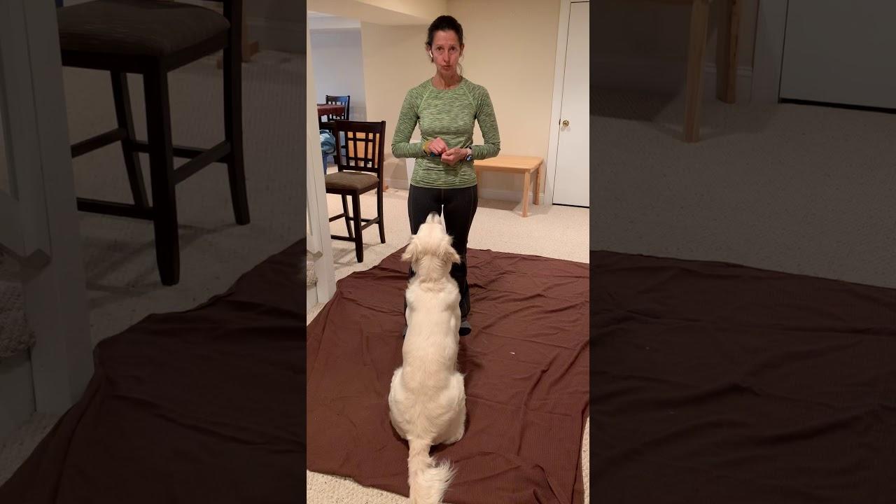 Day 11 - Challenge Video