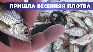 ПРИШЛА ВЕСЕННЯЯ ПЛОТВА НА НЕРЕСТ Рыбалка на плотву весной на озере подводные съёмки