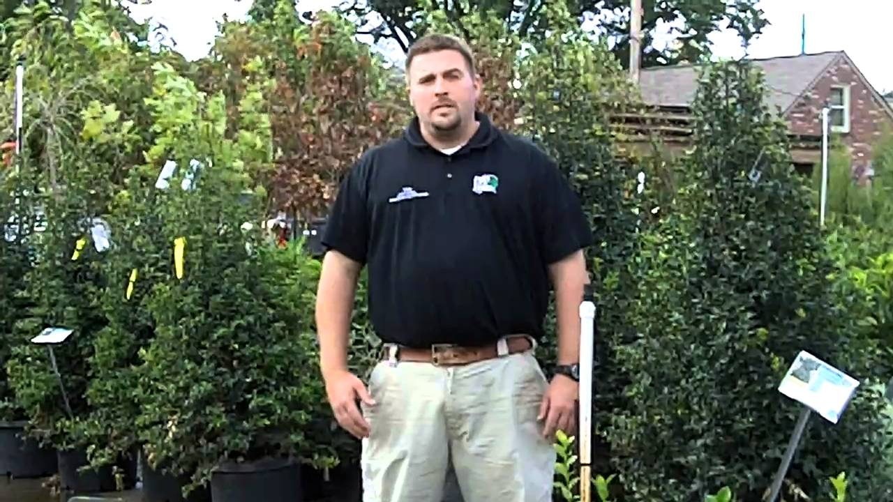 Fall Planting Tip From Frank Otte Nursery U0026 Garden Center Louisville, KY