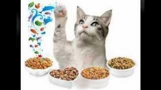 джимпет витамины для кошек отзывы