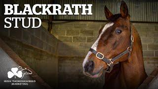 ITM Irish Stallion Showcase 2021 - Blackrath Stud