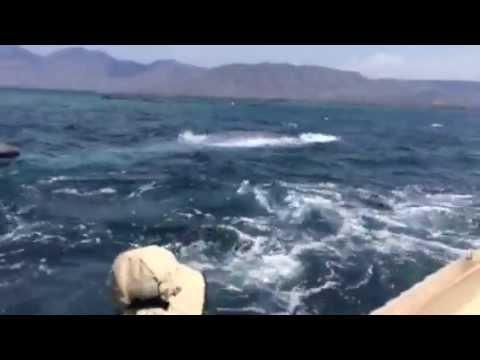 Blue Whale Rescue, Lembata Island (Indonesia)