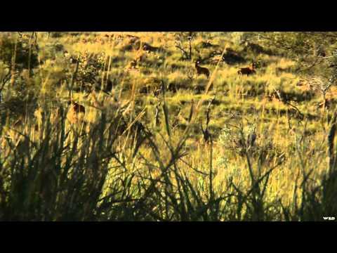 The Zone - Nebraska Whitetails and Namibia Muzzleloader
