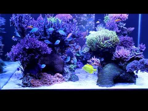 My Coral Garden