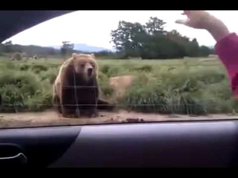 Funny Videos from world wide   Funny Clips   funny animals   funny kids   funny people   YouTube 3