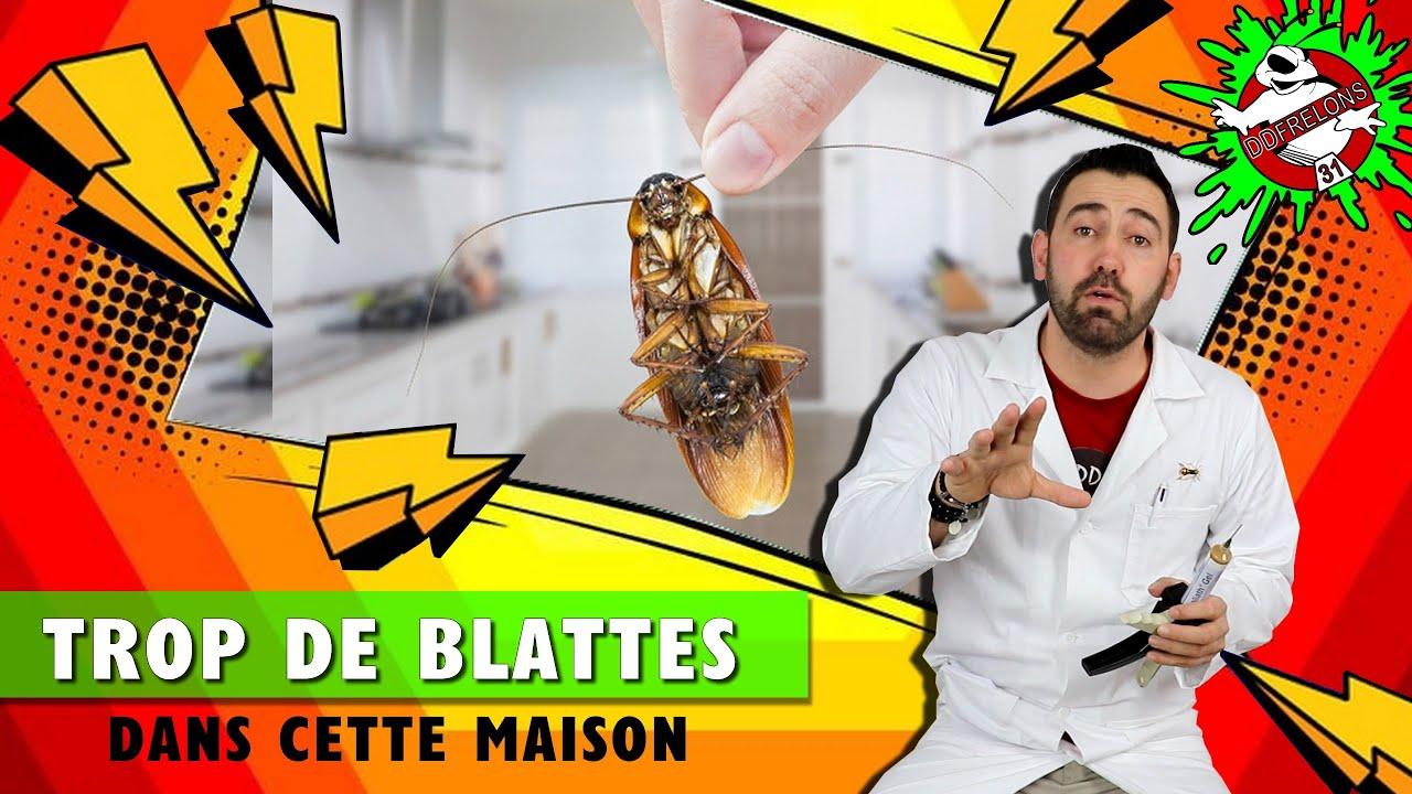 Blatte De Cuisine Photo Énorme infestation de cafards (blattes germaniques)