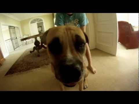 Betty Stupid Dog Dubstep