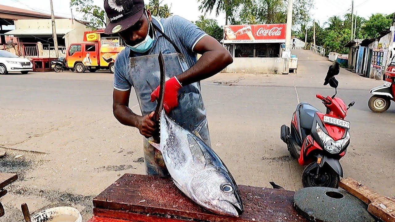 TUNA FISH   FISH CUTTING SKILL   කෙලවල්ලා   SRI LANKA