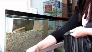 How I Clean My Gerbil Tanks - An Indepth Guide
