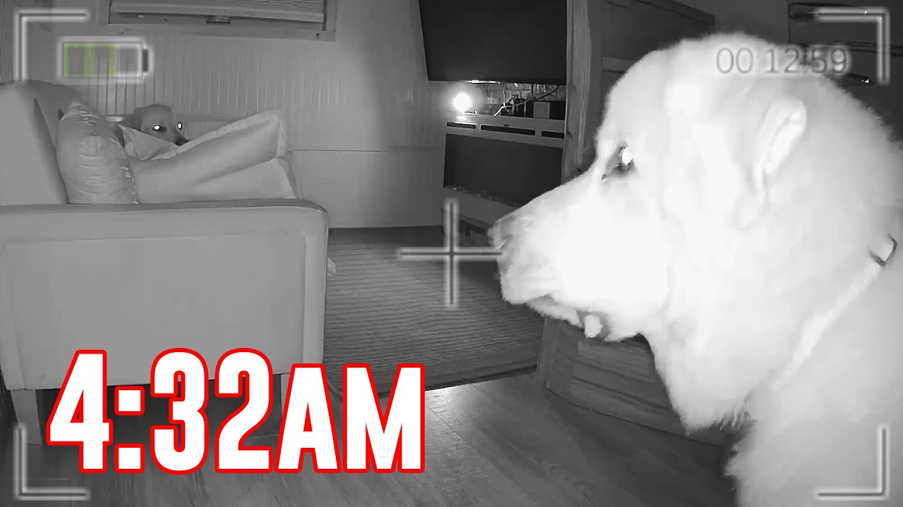what our dogs do alone at night