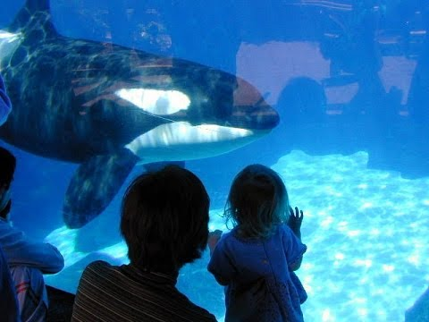 Sea World Roundtable: Does a Visit to the Park Really Educate Children?