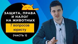 Налог на кошку - ЭТО ПРАВДА? Как закон защитил права животных в России?