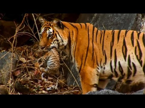 5 Amazing Animal Behaviours Caught on Spy Camera | BBC Earth