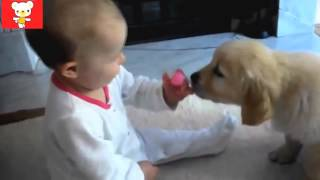 Дети и животные 5 ● Приколы с животными осень 2014 ● Dogs & Cute Babies Compilation ● Part 5155(, 2015-02-05T13:05:37.000Z)