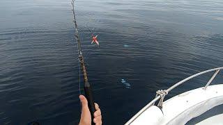 Ловля макрелевого тунца на троллинг Pesca de Melva a curricán