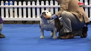 Manchester Championship Dog Show 2016 - Utility group