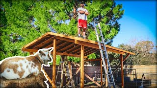 Building a GOAT BARN in our suburban backyard!