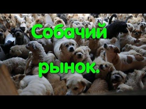 Собачий рынок. Рынок животных. Продажа собак. Щенки. Dog Market. Одесса. Лучшие собаки. Староконка.