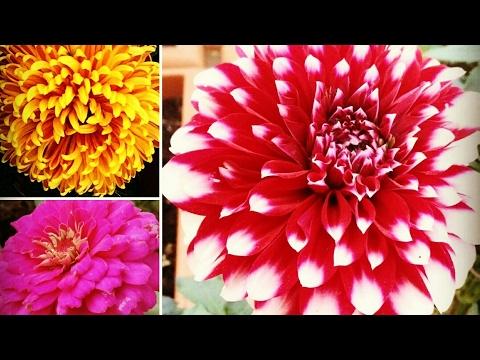 Mumbai Crawford Market Flower Shopping