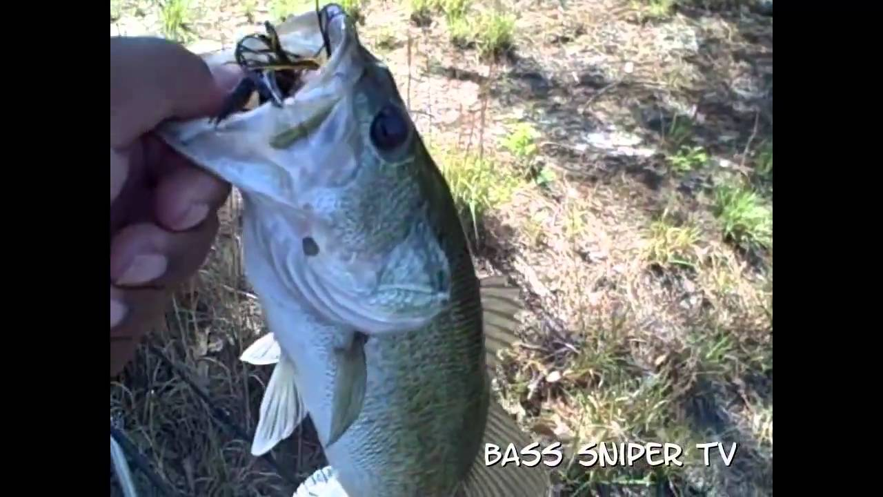 Fayetteville nc bass fishing youtube for Fishing in fayetteville nc