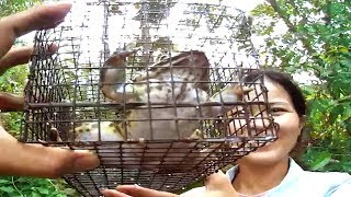 Amazing ! How To Catch Fish Frogs With Iron Grates