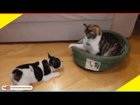 Short Funny Animals Vines 😺🐱😺 Funny Animals Compilation - Whateverfun! thumbnail