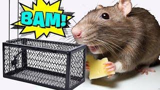 ДВЕ СУПЕР УЛОВИСТЫЕ МЫШЕЛОВКИ-КРЫСОЛОВКИ ИЗ КИТАЯ С АЛИЭКСПРЕСС 🐀 Ловушки для мышей