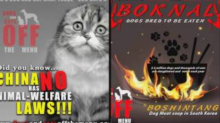 Stop to trade meat dogs and cats in asia