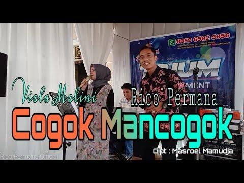 COGOK MANCOGOK |