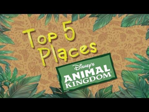 20 Years of Disney's Animal Kingdom Walt Disney World Florida
