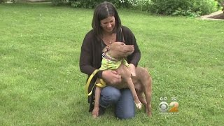 Rescue & Rehab Center Gives Hope To Disabled Dogs