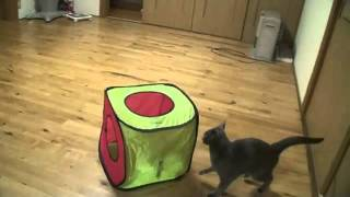 Коты в замедленной съемке