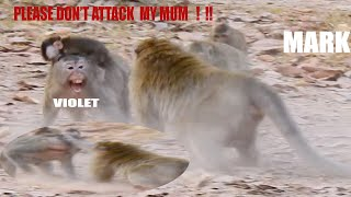 VERY PITY SAMI CARRY MUM HARDLY WHILE MARK ATTACK HER MUM, MARK VERY UGLY KING ! .#MONKEY#