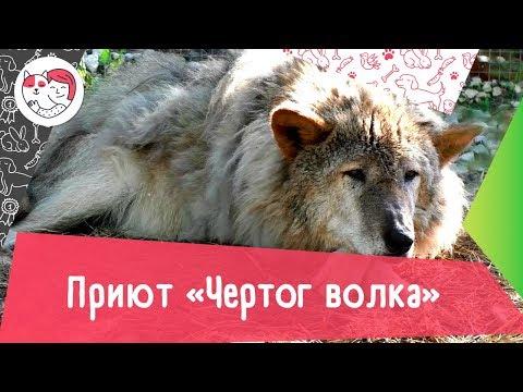Приют для волков «Чертог волка»