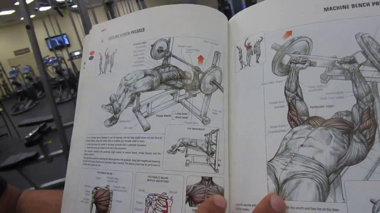 كتاب التشريح العضلي pdf عربي