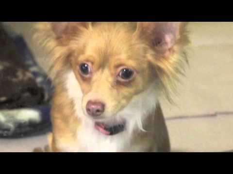 Nebraska City Rescue Video